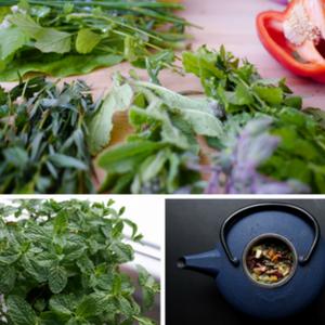 Alle friske krydderurter fra din have kan bruges
